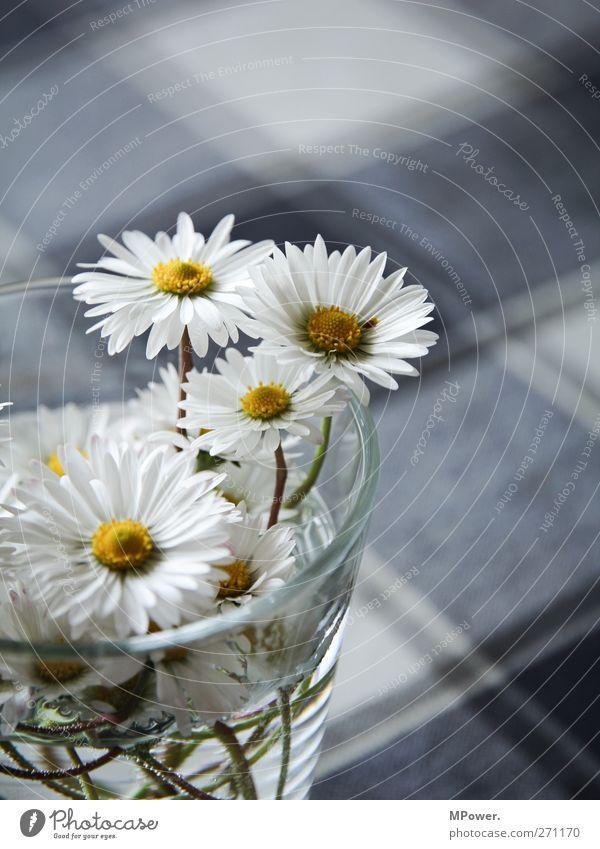 profane tischdeko blau Wasser schön Pflanze Sommer Blume Frühling klein Blüte Kitsch Blühend zart Blumenstrauß Stengel Duft Gänseblümchen