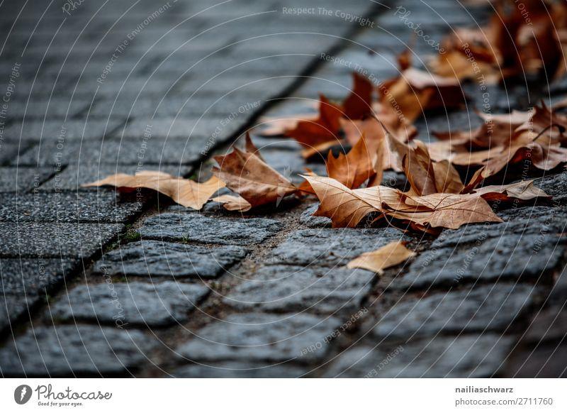 Herbst Natur Pflanze Blatt Ahorn Ahornblatt Stadt Altstadt Pflastersteine Stein dehydrieren kalt natürlich trocken braun grau Vergänglichkeit Farbfoto