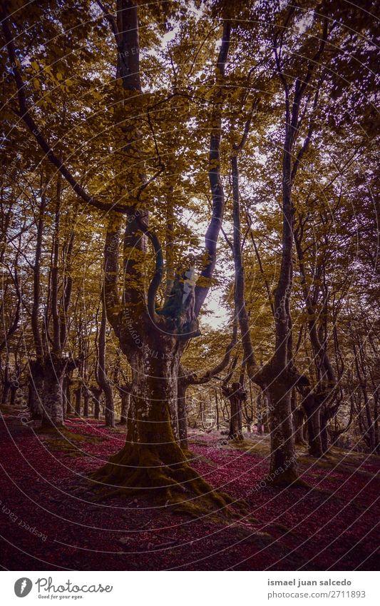 Ferien & Urlaub & Reisen Natur Farbe Landschaft Sonne Baum Erholung ruhig Wald Berge u. Gebirge Herbst Platz Spanien Gelassenheit Tapete Phantasie