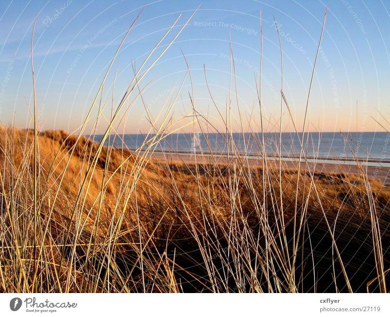 Dünengras Meer Gras Stranddüne Sand Wasser