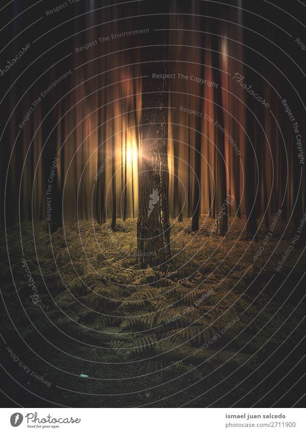 Bäume und Sonnenuntergang im Wald in der Natur Baum Farbe farbenfroh Berge u. Gebirge Landschaft Außenaufnahme Ferien & Urlaub & Reisen Platz Ausflugsziel
