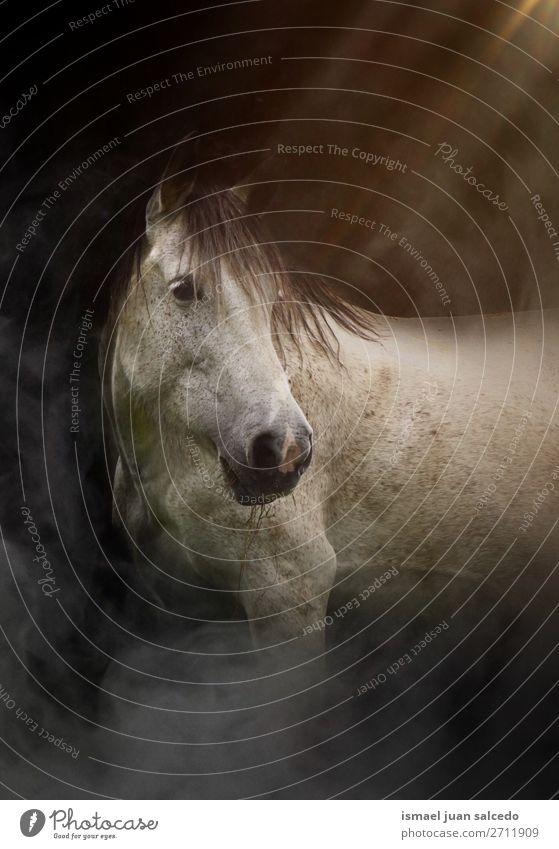 Natur weiß Tier Wiese wild elegant niedlich Pferd Bauernhof Beautyfotografie Tapete ländlich