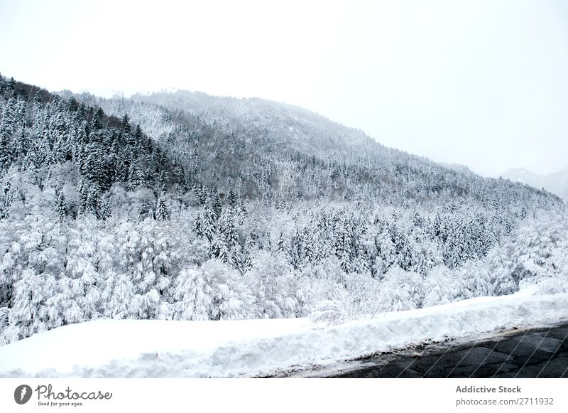 Tannenwald mit Schnee bedeckt Wald Winter Natur weiß Berge u. Gebirge Hügel kalt