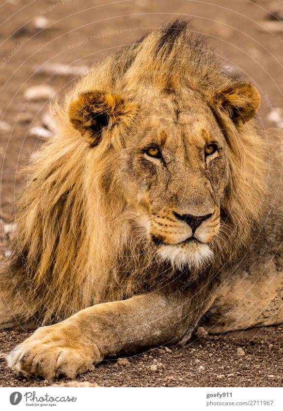Neugierig!!! Ferien & Urlaub & Reisen Tourismus Ausflug Abenteuer Ferne Freiheit Sightseeing Safari Expedition Umwelt Natur Wärme Dürre Tier Wildtier