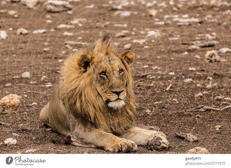 Just relaxe Ferien & Urlaub & Reisen Natur Tier Ferne Wärme Umwelt Tourismus Freiheit Sand Ausflug Erde elegant Wildtier Abenteuer genießen groß