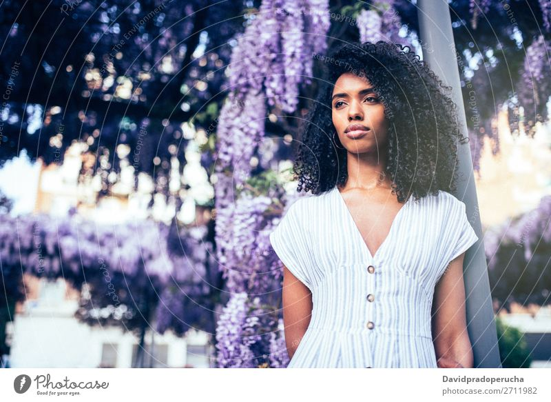 Junge schwarze Frau umgeben von Blumen Blüte Frühling Fliederbusch Porträt multiethnisch Afrikanisch Person gemischter Abstammung Fürsorge Wegsehen