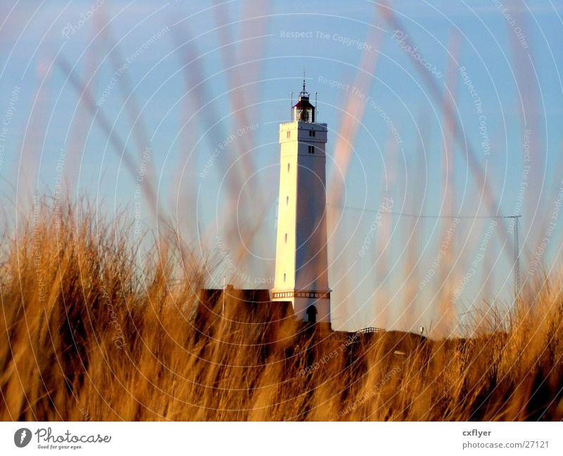 Leuchtturm in den Dünen Sonne Strand Gras Architektur Stranddüne