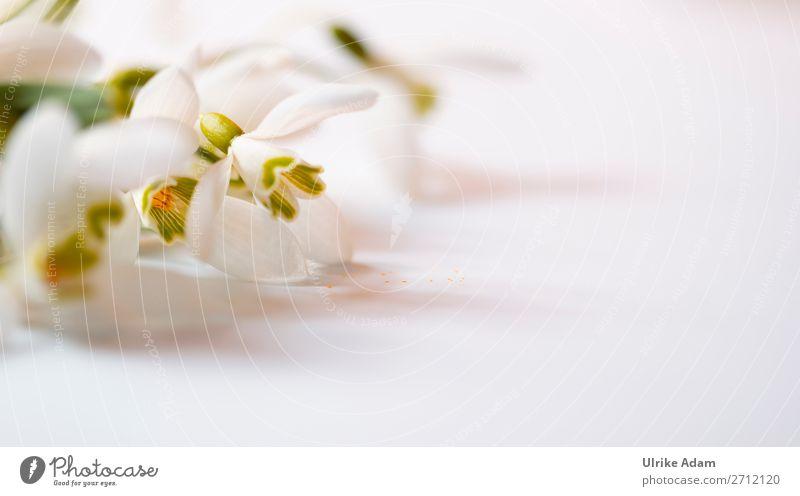 Schneeglöckchen Design Wellness harmonisch Erholung ruhig Meditation Spa Dekoration & Verzierung Tapete Osterkarte Feste & Feiern Muttertag Ostern Trauerfeier