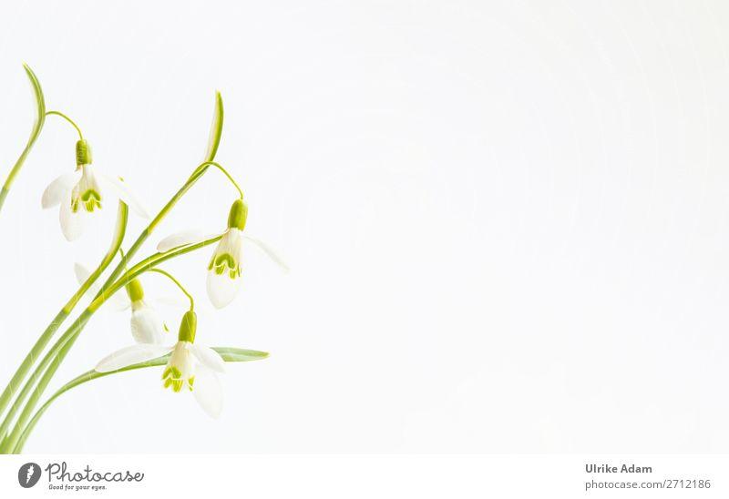 Schneeglöckchen elegant Design Wellness harmonisch Wohlgefühl Erholung Spa Dekoration & Verzierung Trauerkarte Feste & Feiern Muttertag Ostern Hochzeit