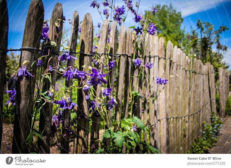 Gartentraum Natur blau Pflanze braun violett