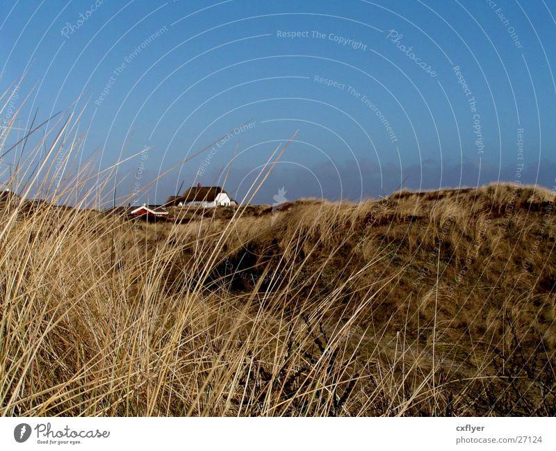 Weites Land Gras Haus Hügel Einsamkeit Stranddüne Sand