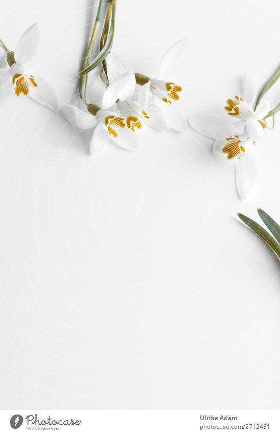 Schneeglöckchen Design Wellness Spa Trauerkarte Osterkarte Valentinstag Muttertag Ostern Trauerfeier Beerdigung Pflanze Frühling Blume Blüte Blühend frisch weiß