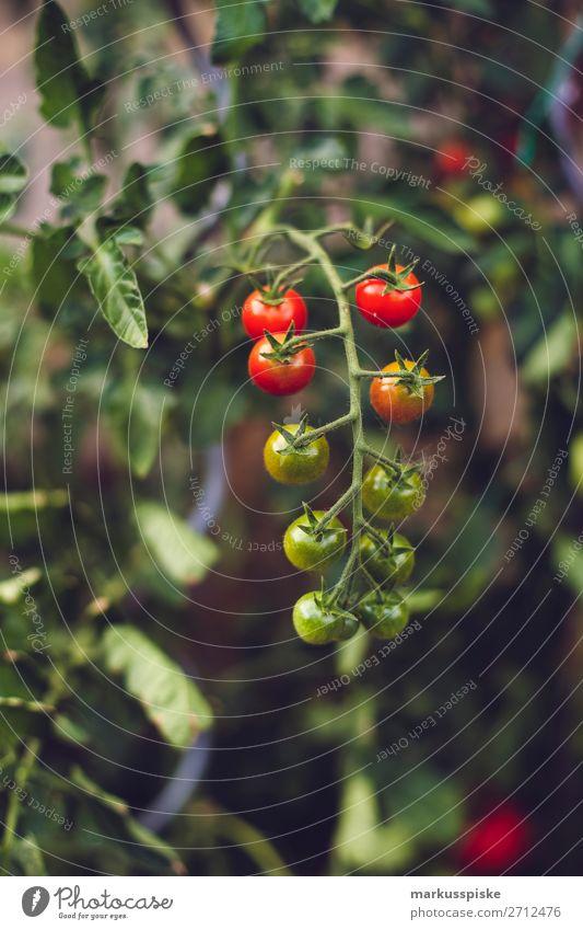 Frische Bio Tomaten Natur Gesunde Ernährung rot Freude Gesundheit Lebensmittel Essen Glück Garten Zufriedenheit Freizeit & Hobby frisch Wachstum genießen