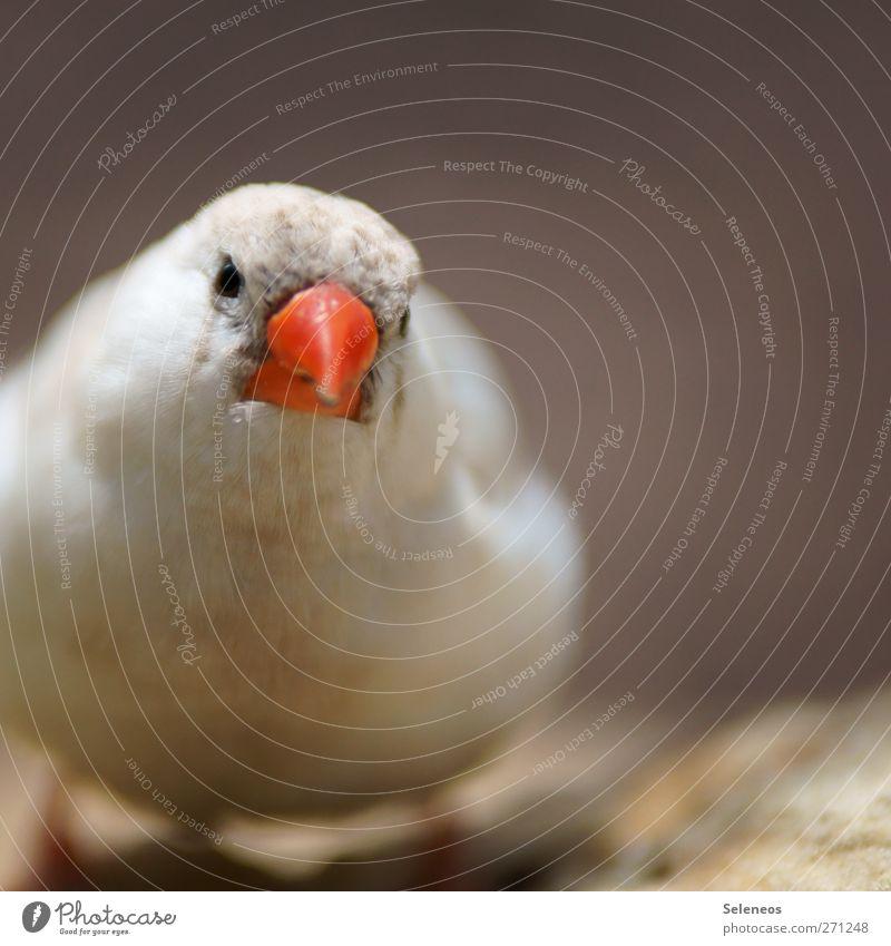 komm mir nicht zu nah Natur Sonne Sommer Tier Umwelt Frühling klein Vogel Tiergesicht Schnabel