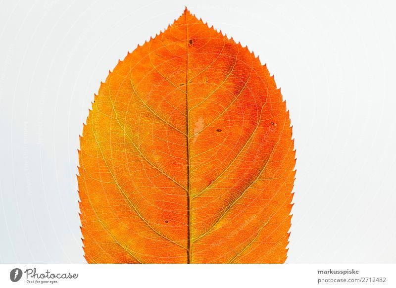 Herbst Farben Blatt harmonisch Wohlgefühl Sinnesorgane Erholung ruhig Garten Natur Pflanze Tier berühren leuchten frisch trocken braun gelb gold orange Freude