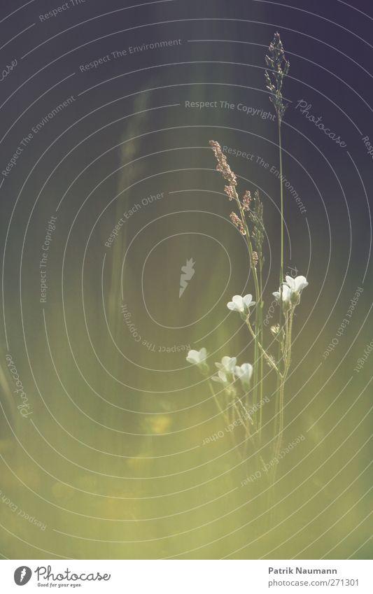 Blütenvielfalt Natur Pflanze grün schön Sommer Blume Erholung Einsamkeit Landschaft Tier schwarz Umwelt Blüte Stimmung Freundschaft elegant