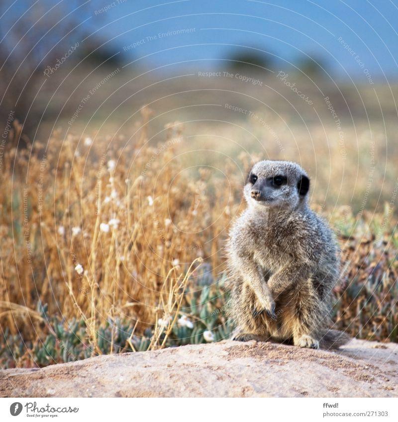 Einzelgänger Himmel Ferien & Urlaub & Reisen Pflanze Tier Einsamkeit ruhig Erholung Landschaft Gras Freiheit klein Sand Denken Erde Zufriedenheit Wildtier