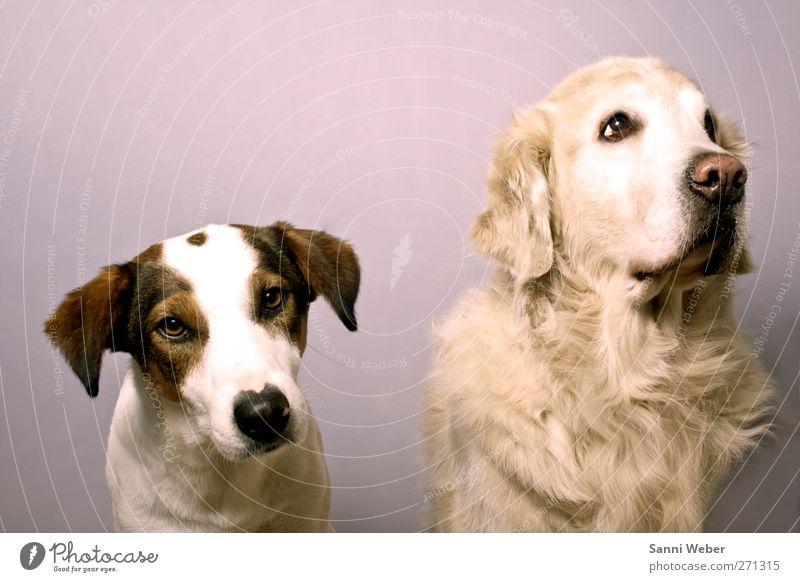 Hund Tier Liebe Gefühle Fröhlichkeit einzigartig Tiergesicht genießen Partnerschaft Originalität