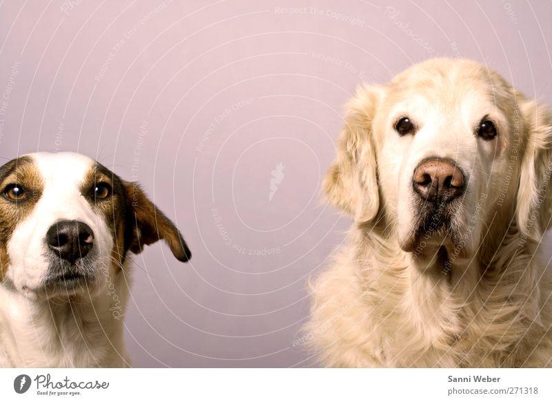 Zweier Takt Tier Haustier Hund 1 genießen Liebe Blick Gefühle Freude Partnerschaft Farbfoto mehrfarbig Licht Porträt Tierporträt Blick nach vorn