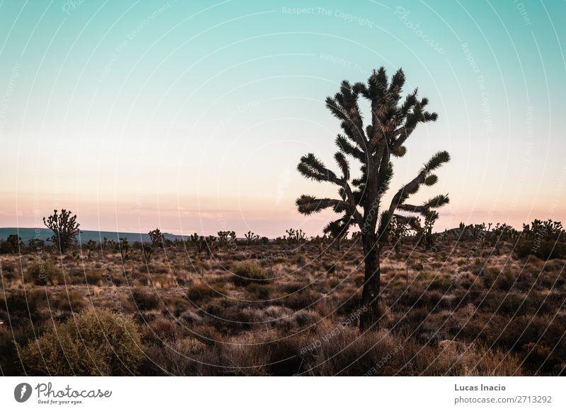 Mojave-Wüste an der Route 66 in Kalifornien Ferien & Urlaub & Reisen Tourismus Ausflug Abenteuer Ferne Freiheit Sightseeing Sommer Berge u. Gebirge Umwelt Natur