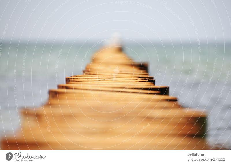 Hiddensee | Dieser Weg... blau Sommer Strand Frühling Holz Küste grau Horizont braun Wellen Insel Schönes Wetter Ostsee Holzbrett Wolkenloser Himmel Befestigung