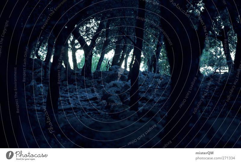 murky. Natur Baum Wald Umwelt Landschaft dunkel gefährlich ästhetisch geheimnisvoll eng Märchen unheimlich Waldlichtung Verhext Märchenwald unbequem