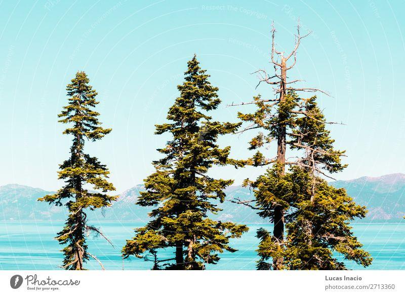 Bäume vor der Emerald Bay und dem Lake Tahoe Ferien & Urlaub & Reisen Tourismus Sommer Berge u. Gebirge Garten Umwelt Natur Himmel Baum Gras Blatt Park Wald