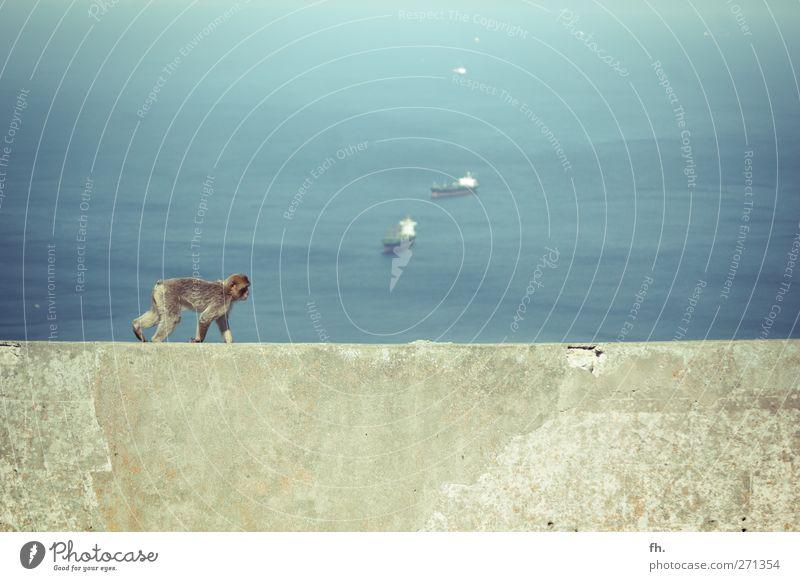 Apey Road blau Wasser Meer Tier ruhig Erholung grau Wasserfahrzeug gehen elegant hoch Beton Abenteuer niedlich Schönes Wetter Neugier