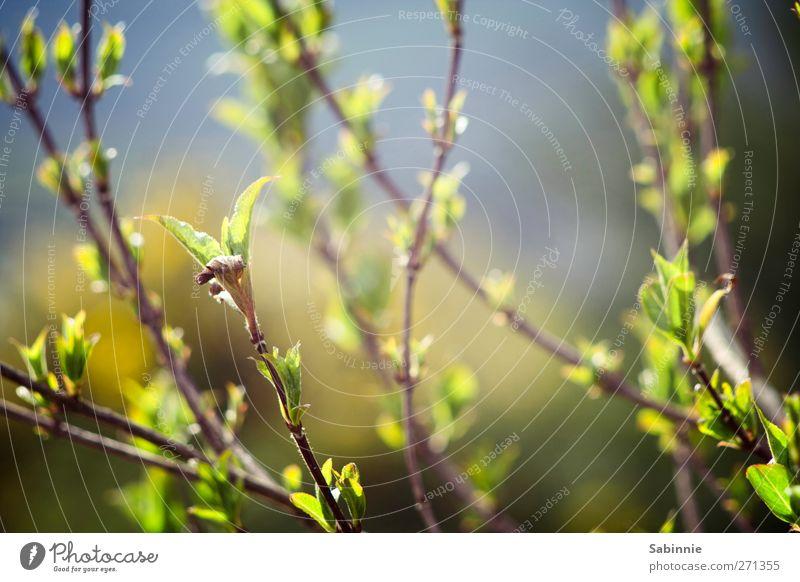 Verzweigt Natur blau grün schön Pflanze Sommer Blatt Tier Umwelt Frühling Garten braun elegant Sträucher Schönes Wetter Ast