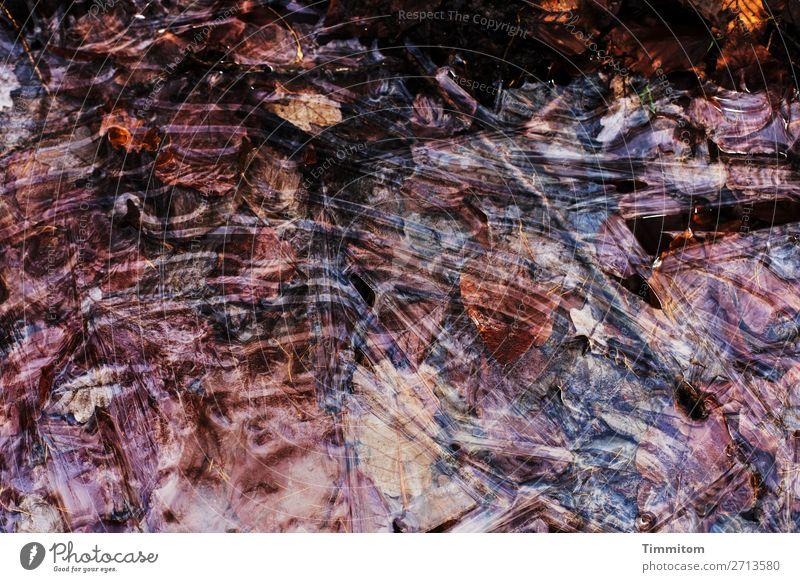 Es gibt Eis! Umwelt Natur Wasser Winter Frost Blatt Pfütze frieren kalt natürlich braun schwarz Blick Wald Farbfoto Außenaufnahme Menschenleer Tag Licht