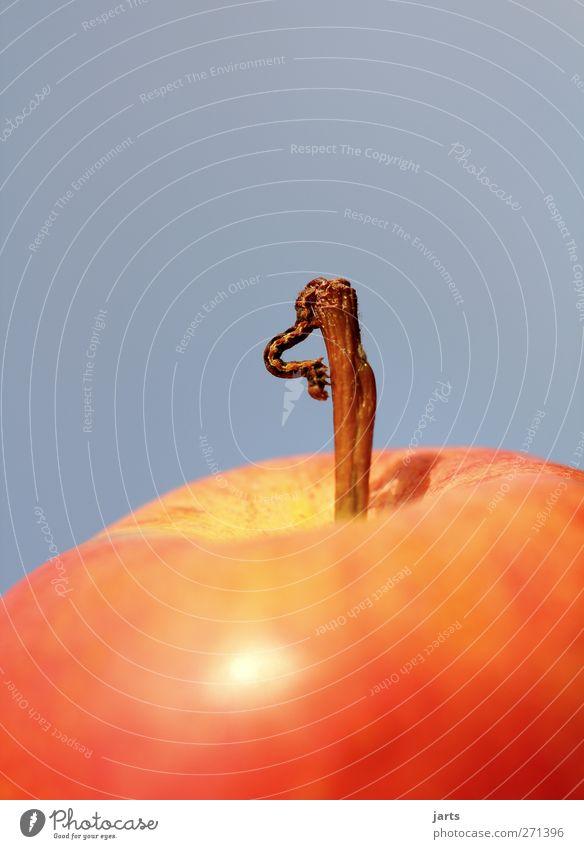 vegetarier Frucht Apfel Bioprodukte Wildtier Wurm 1 Tier Fressen Natur Ernährung Raupe Außenaufnahme Nahaufnahme Textfreiraum oben Textfreiraum unten Tag
