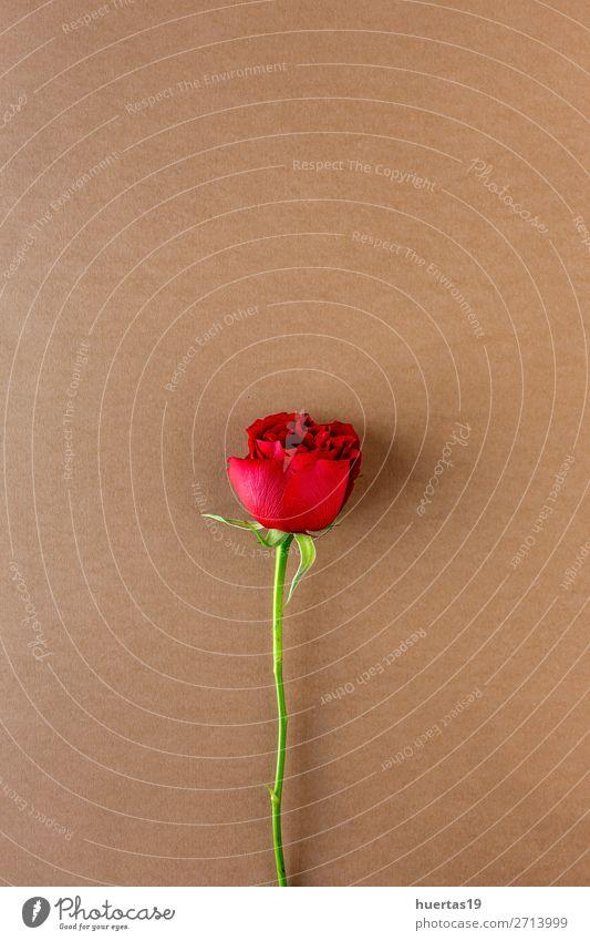 rote Rosen mit braunem Hintergrund elegant Stil Design Feste & Feiern Valentinstag Hochzeit Geburtstag Kunst Blume Blüte Liebe natürlich oben Romantik