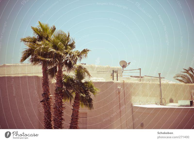 palm tree.01 Ferien & Urlaub & Reisen Sommer Haus Kabel Satellitenantenne Erde Wolkenloser Himmel Wärme Pflanze Palme Kleinstadt Mauer Wand Fassade Terrasse