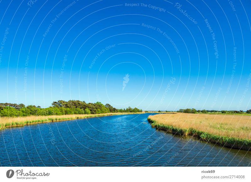 Blick auf den Prerowstrom in Prerow Erholung Ferien & Urlaub & Reisen Tourismus Natur Landschaft Wasser Wolkenloser Himmel Wetter Baum Blatt Wald blau gelb grün