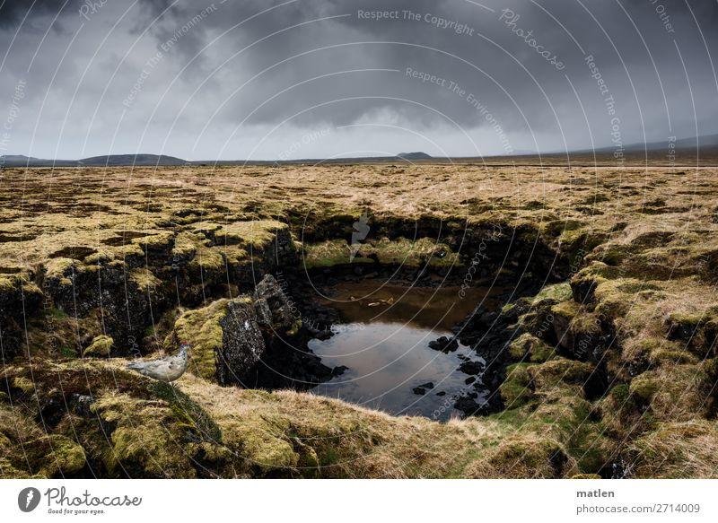 Wasserloch Natur Landschaft Pflanze Himmel Wolken Horizont Frühling schlechtes Wetter Moos Felsen Moor Sumpf Teich Menschenleer dunkel braun gelb grau grün