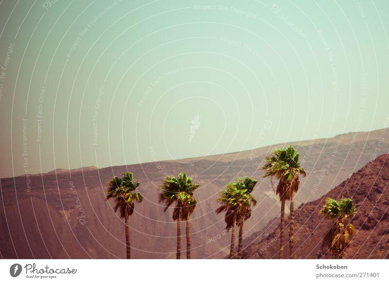 palm tree.02 Natur Ferien & Urlaub & Reisen grün Sommer Pflanze Sonne rot Landschaft Berge u. Gebirge Wärme Bewegung Stein Sand Felsen Erde wandern