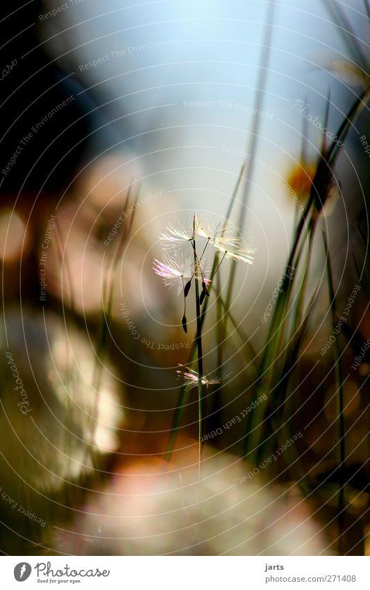 ruhe Natur Pflanze Sommer Blume ruhig Wiese Wärme Gras Frühling Blüte Stimmung natürlich Schönes Wetter Gelassenheit Löwenzahn positiv