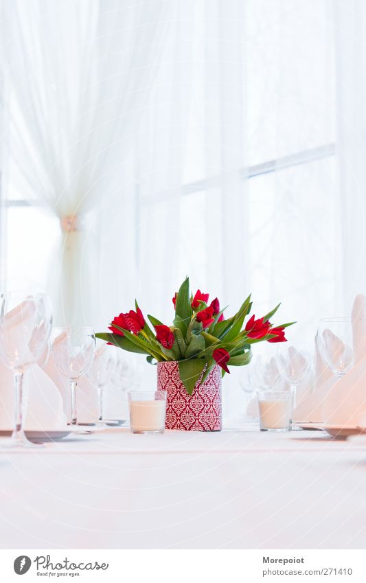Tulpen auf dem Tisch Geschirr Glas Lifestyle elegant Design Freude Häusliches Leben Traumhaus Innenarchitektur Dekoration & Verzierung Möbel Veranstaltung