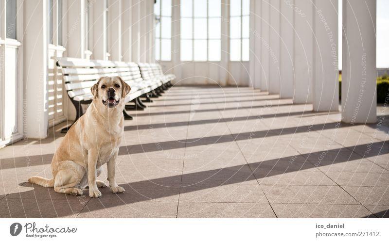 Guck mal.. Hund Ferien & Urlaub & Reisen Tier Glück sitzen Ausflug Tourismus Labrador