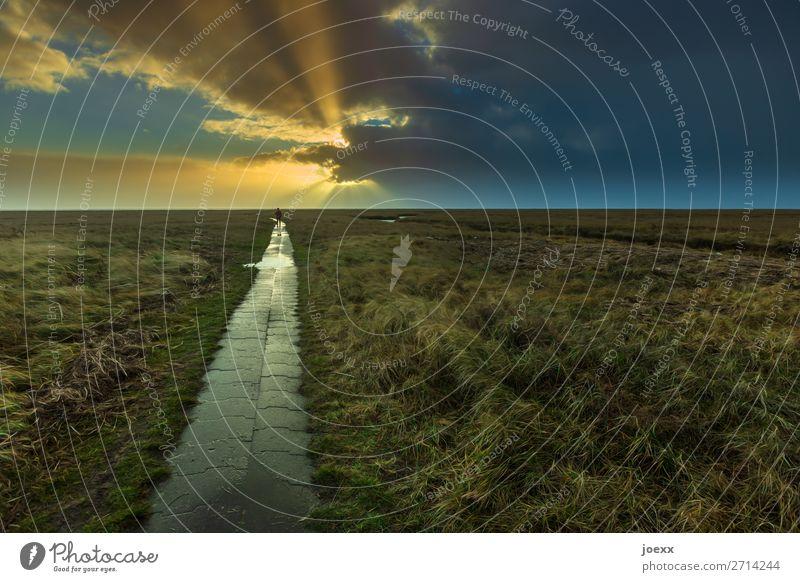 Unersetzlich 1 Mensch Natur Landschaft Himmel Wolken Horizont Sonnenlicht Schönes Wetter Gras Wiese Wege & Pfade Fußweg gehen Mut Warmherzigkeit ruhig Hoffnung