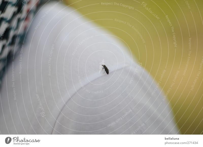 Hiddensee | Hubschrauberlandeplatz I Mensch Natur weiß Pflanze Tier schwarz Umwelt Wiese Gras Frühling Körper Wildtier sitzen T-Shirt Schönes Wetter Schulter