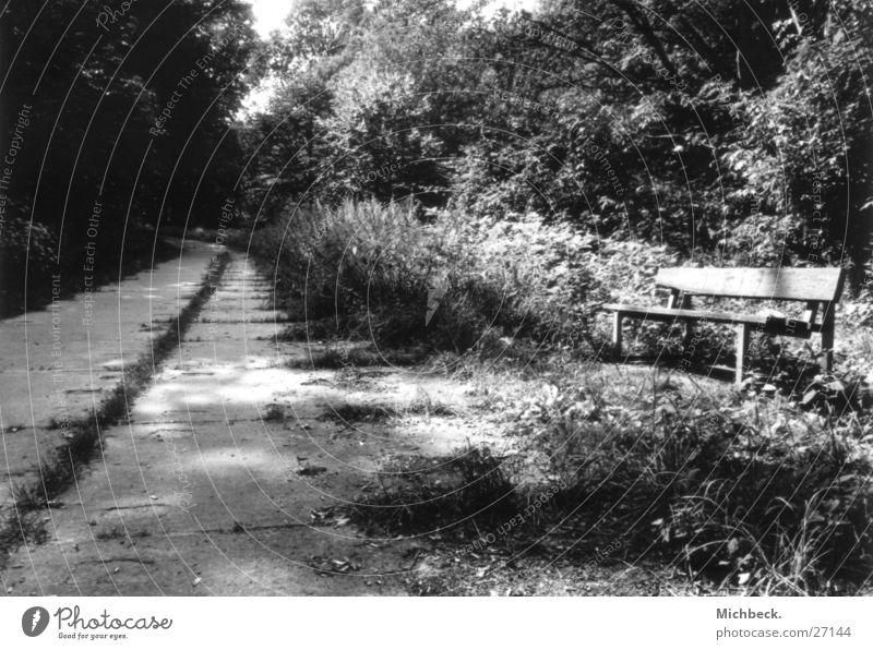 Zeit mal Weg weiß schwarz Wald Wege & Pfade Park Bank