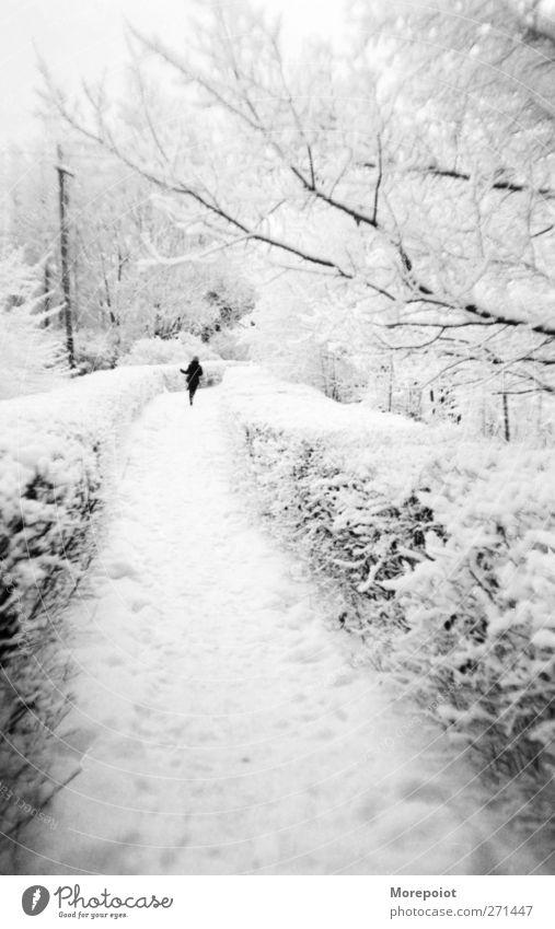Mensch Natur Jugendliche weiß schön Baum Winter schwarz Erwachsene Wald Ferne kalt Schnee Gefühle Bewegung grau