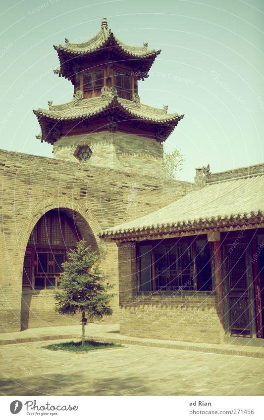 lonely tree Frühling Pflanze Baum Grünpflanze Park Xi'an China Kleinstadt Altstadt Menschenleer Haus Kirche Palast Burg oder Schloss Bauwerk Architektur Pagode
