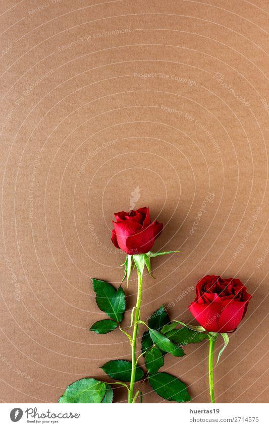 rote Rosen mit braunem Hintergrund elegant Stil Design Feste & Feiern Valentinstag Hochzeit Geburtstag Blume Blatt Blüte Liebe natürlich oben Romantik