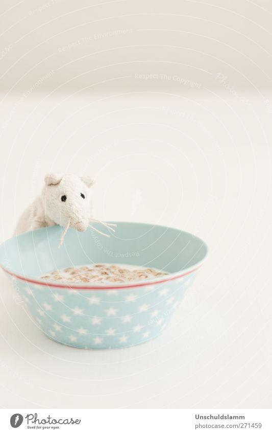 Katerfrühstück weiß Freude Tier Umwelt Ernährung grau lustig Essen hell Kindheit Häusliches Leben niedlich einzigartig trinken Küche Kitsch