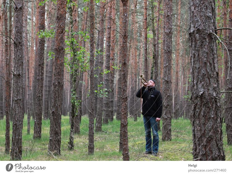Mann in Jeans und dunkler Jacke steht im Fichtenwald und bläst eine Trompete Mensch maskulin Erwachsene 1 45-60 Jahre Umwelt Natur Pflanze Frühling Baum Gras