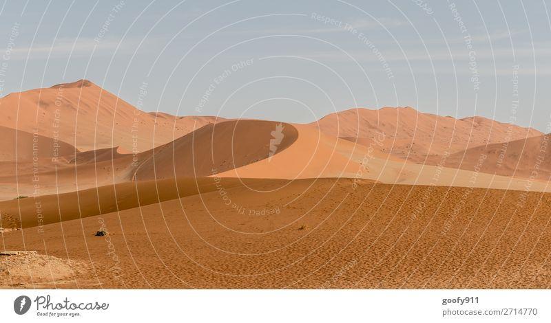 Namib Wüste Namibia III Ferien & Urlaub & Reisen Natur Pflanze schön Landschaft Tier Einsamkeit Ferne Wärme Umwelt Tourismus Freiheit Sand Ausflug Erde