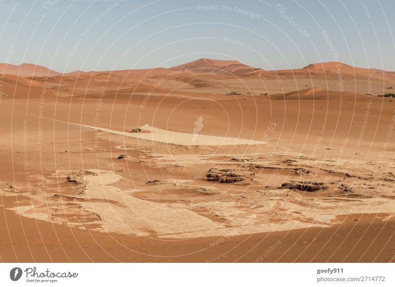 Namib Wüste Namibia Himmel Ferien & Urlaub & Reisen Natur Pflanze schön Landschaft Tier Einsamkeit Ferne Wärme Umwelt natürlich Tourismus Freiheit Sand Ausflug