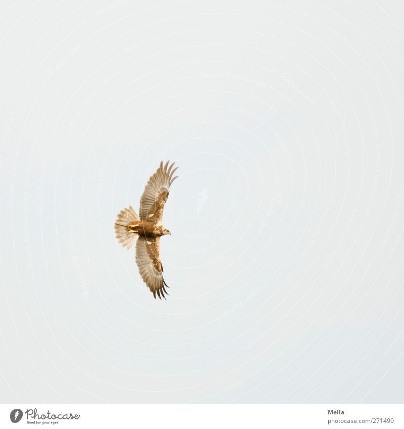 Abgedreht Natur Tier Umwelt Bewegung Freiheit Luft Vogel fliegen Wildtier natürlich frei ästhetisch Flügel Feder ausgestreckt breit
